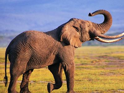 点击图片进入下一页>>>>>> 在古印度跟古埃及中,像鳄鱼,大象这样被认