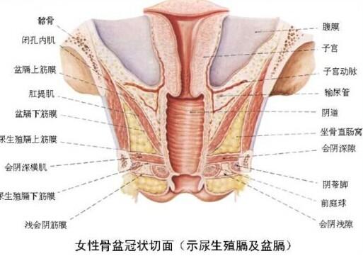 女性生殖器高清图片汇总