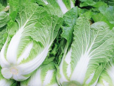 白菜叶片下表皮细胞结构图