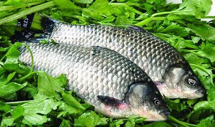 增强抗病能力 鲫鱼所含的蛋白质优,齐全,易消化吸收,是肝肾疾病,心脑