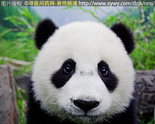 熊猫病是什么病?真相可一点不好玩
