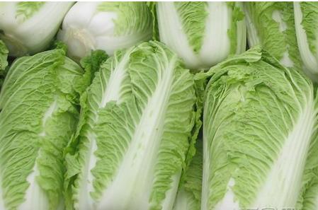 结实的大白菜口感甜 茎叶多的新鲜图片