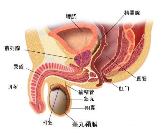 男性前列腺按摩 体验神秘美妙的前列腺高潮