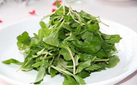 马兰头菜施用有机肥的技术