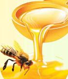 春季喝蜂蜜 健康甜蜜蜜