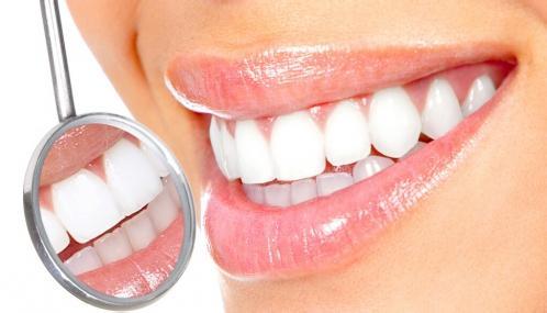 嘴巴牙齿结构图