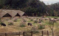 中国最美猪圈落户杭州