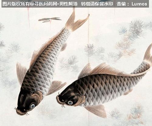 夏季补肾四宝:大虾泥鳅蚕蛹核桃