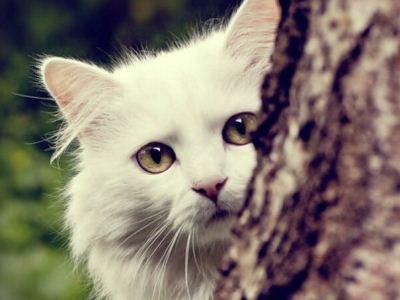 女人爱养猫更易产生自杀心理