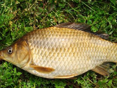 鱼图片大全 鱼的 夏季