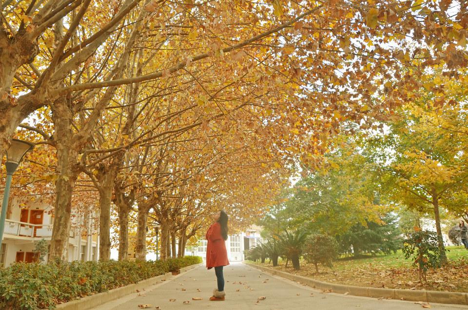 入秋夜间树林风景图