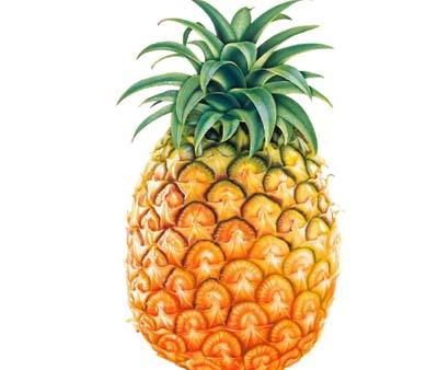菠萝编法图解步骤