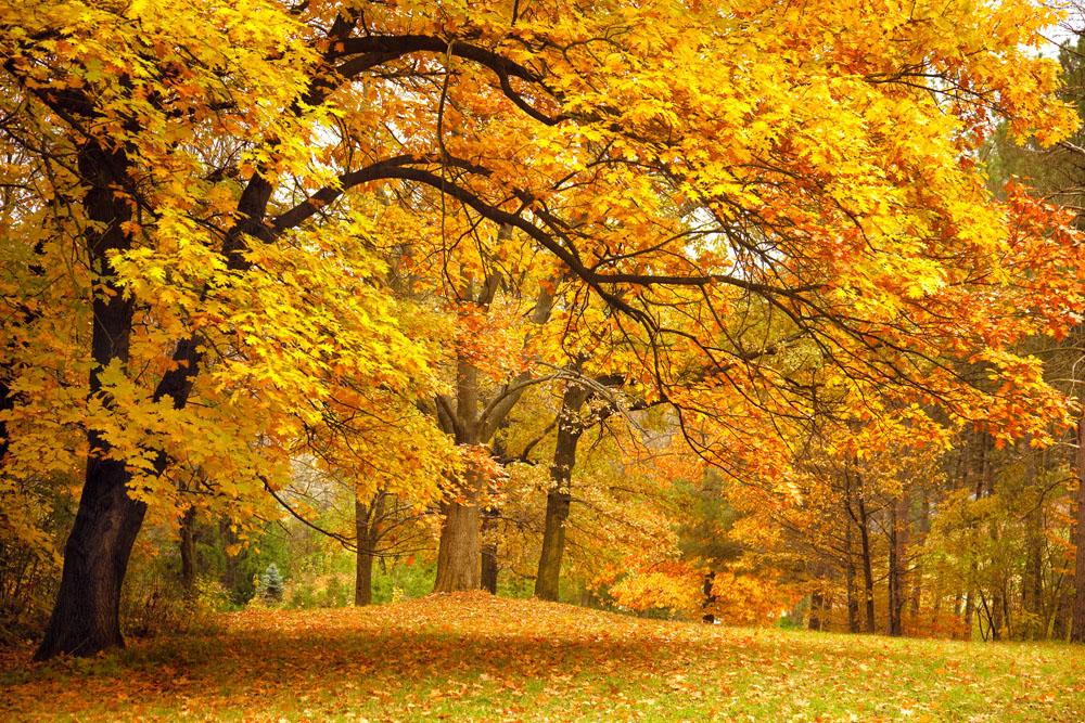 秋天风景图片真实图片