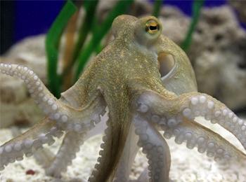章鱼太空泥制作图片