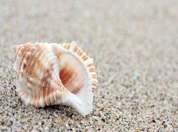 海螺图案设计横切面