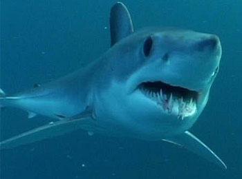 儿童鲨鱼动物简笔画