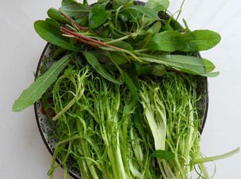 苣荬菜可以施用有机肥吗