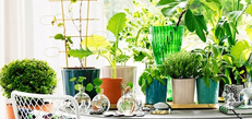 家居绿化 健康舒缓